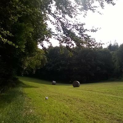 Fenaison dans notre ferme à Gurunhuel (22)