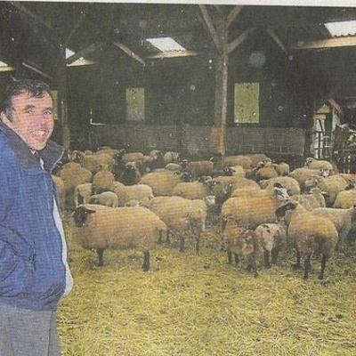 Philippe le Noahaïc: éléveurs d''agneaux