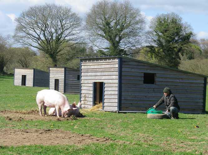 ALAIN SCOUARNEC – Éleveur de bovins et porcs à GURUNHUEL imgp3028