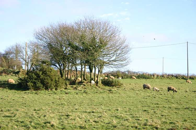 PHILIPPE LE NOHAIC - Eleveur de moutons à LA CHAPELLE NEUVE img8395