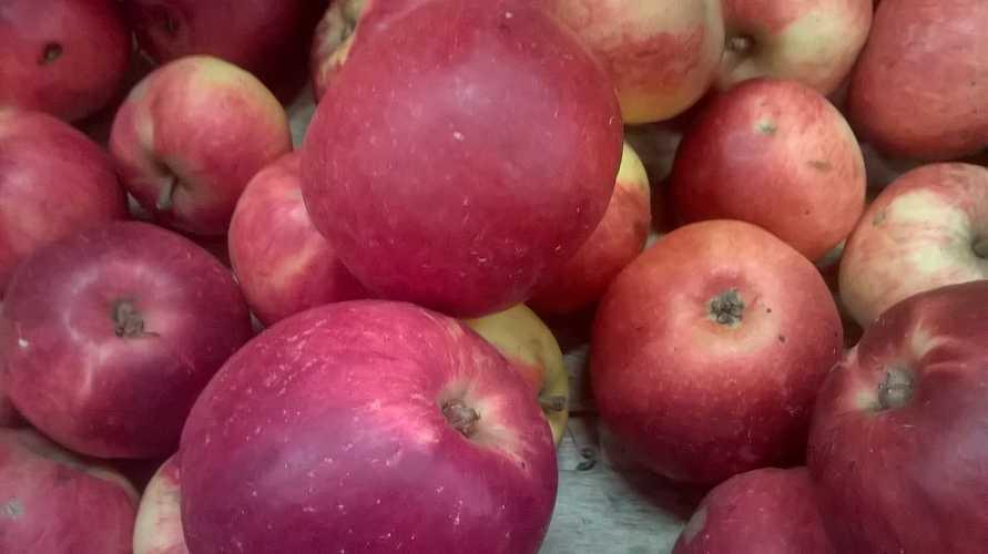 Pommes 0